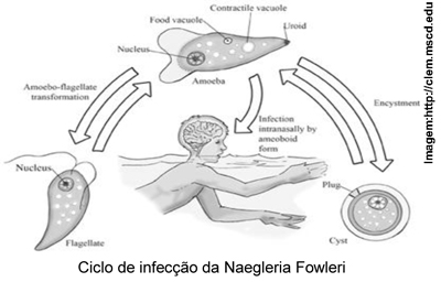Naegleria-1